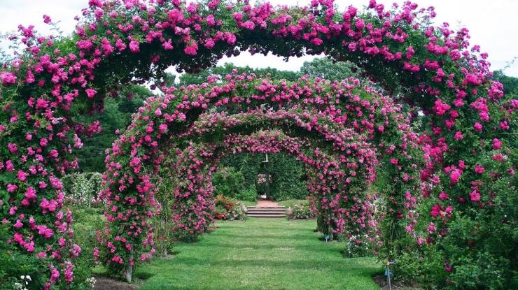 Садовая арка в цветочном обрамлении