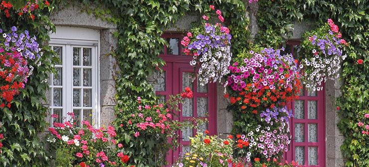 цветы_много