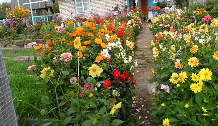 цветы_выбор