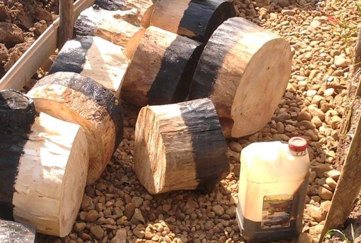 Готовые спилы дерева для дорожки
