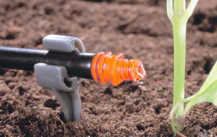 полив у корня